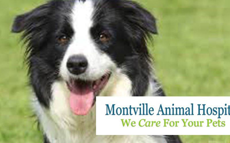 Sponsor – Montville Veterinary Clinic